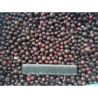 Blackcurrant bulk